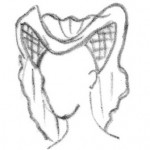 białogłowa